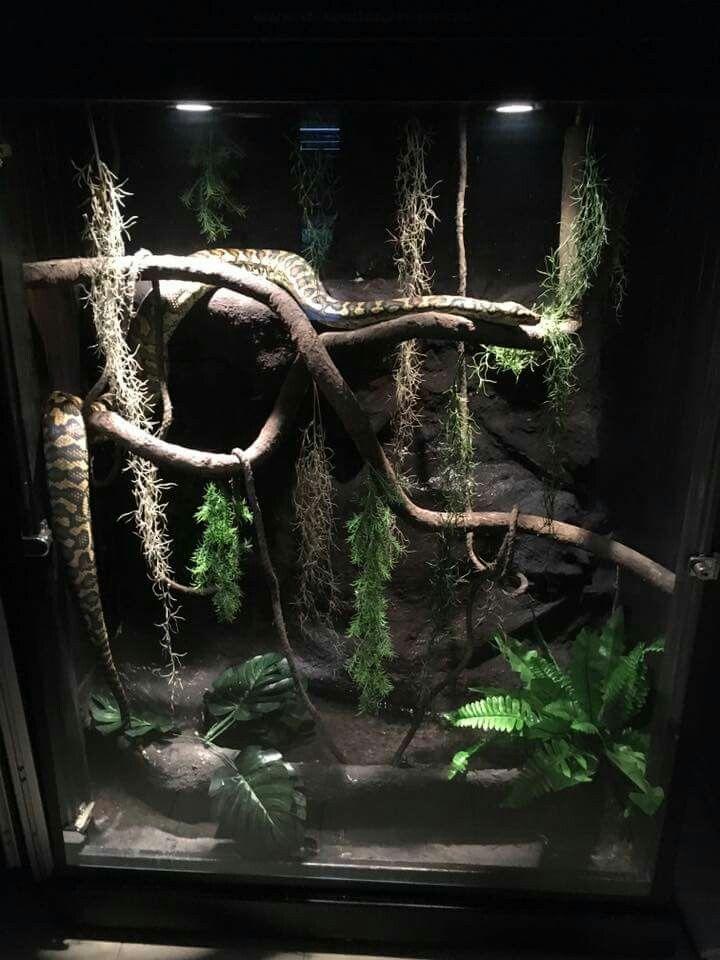 Nice Idea For The Frills Products I Love Reptile Terrarium