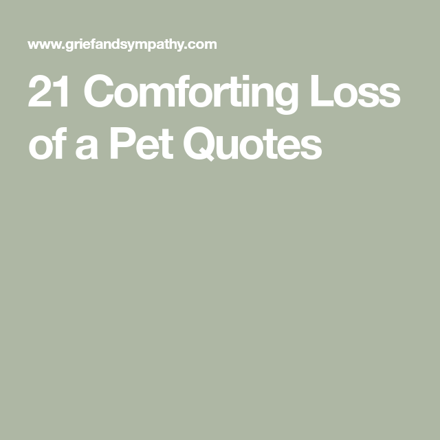 21 forting Loss of a Pet Quotes Tech