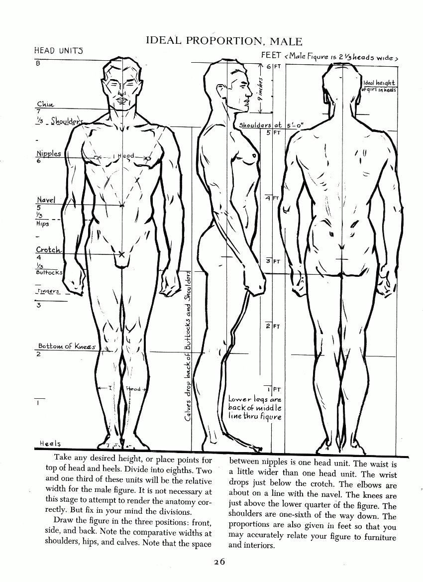 Ideal adult male proportion. | Anatomy Tutorials | Pinterest ...