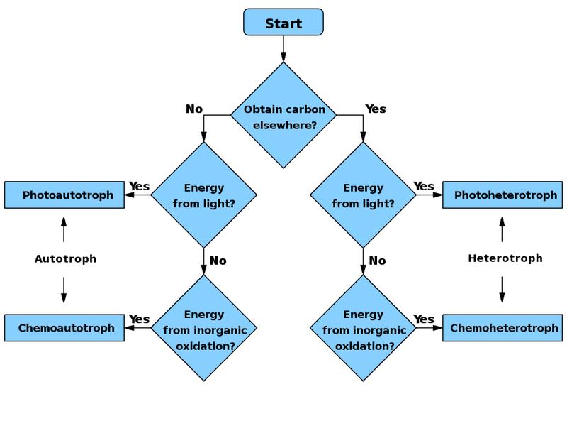 Phototroph Workflow Diagram Acronis True Image Metabolism