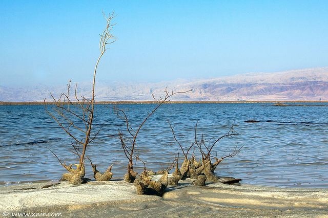 Against all odds II, Dead Sea, Lowest place on earth, Israel. Visit www.couponscrate.com for coupons! :) Repin and Like!