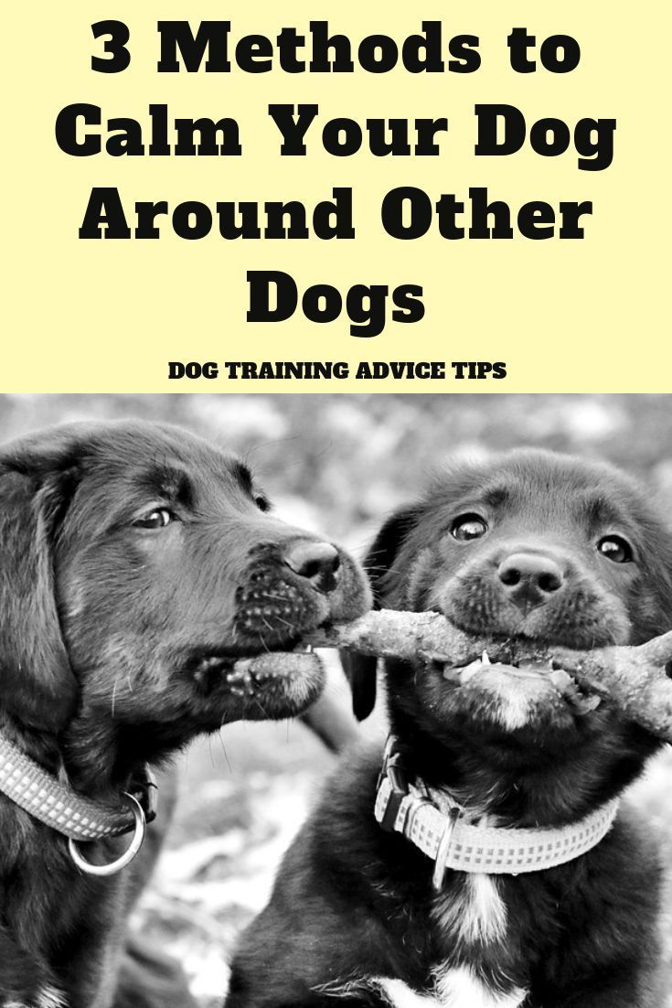 3 methods to calm your dog around other dogs dog