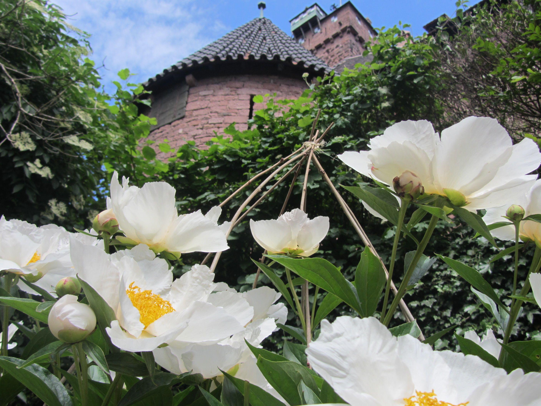 0d09b011e7f2821fb9108b36f65d759b Luxe De Fleurs De Jardin Des Idées