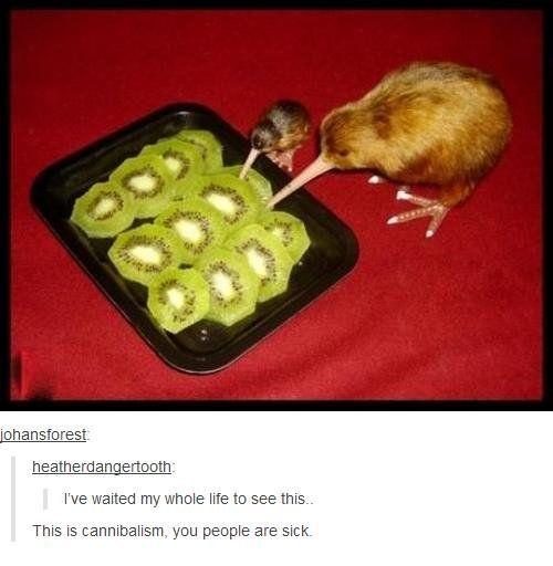 Kiwi bird diet