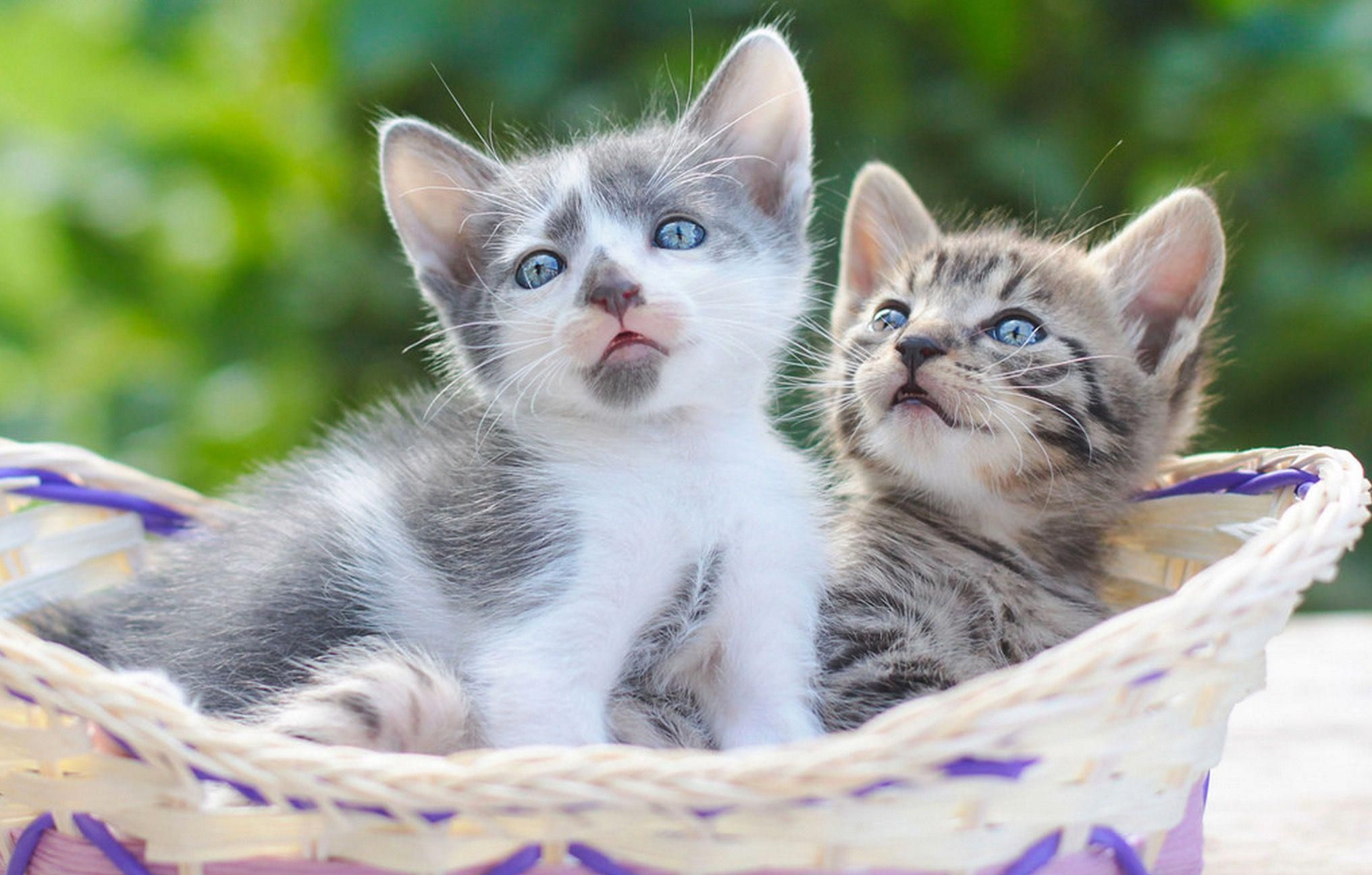 Pin on Adorable kittens