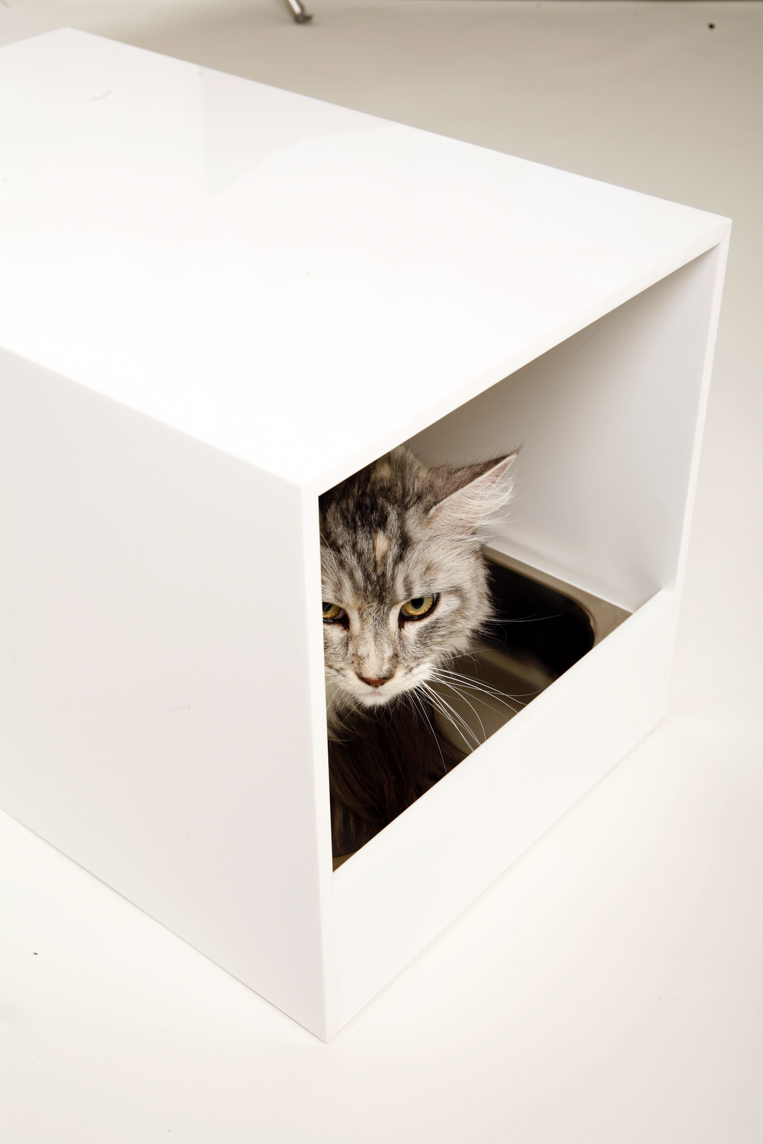 Silver Tabby in a Mungo & Maud cat litter box Animals