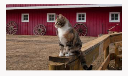 Adopt a Barn Cat Cats, Humane society, Animal rescue stories