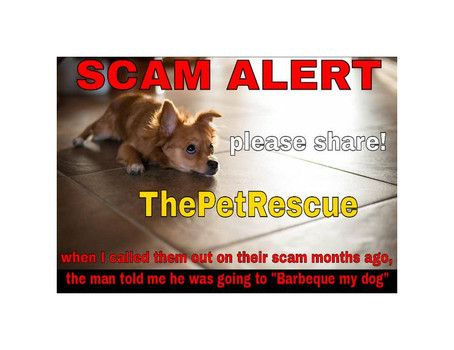 Graphic Made By Angry Dog Owner To Put On Craig S List Pets And