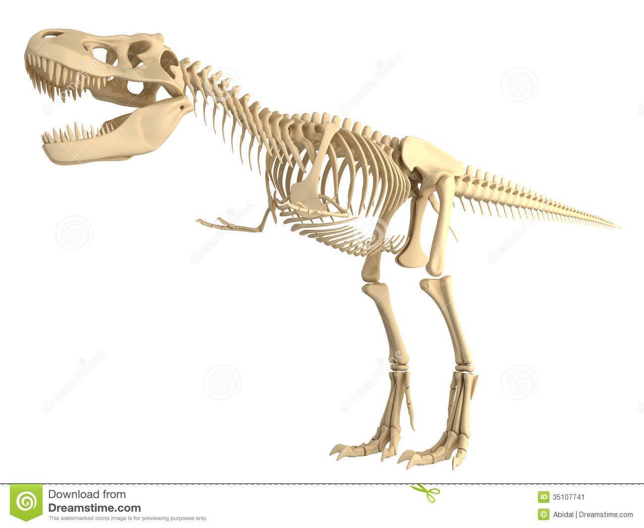 esqueleto dinosaurio - Buscar con Google | inspiración | Pinterest ...