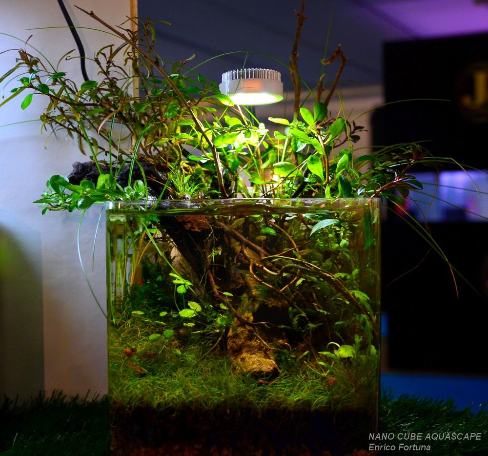 Nano Cube Aquascape