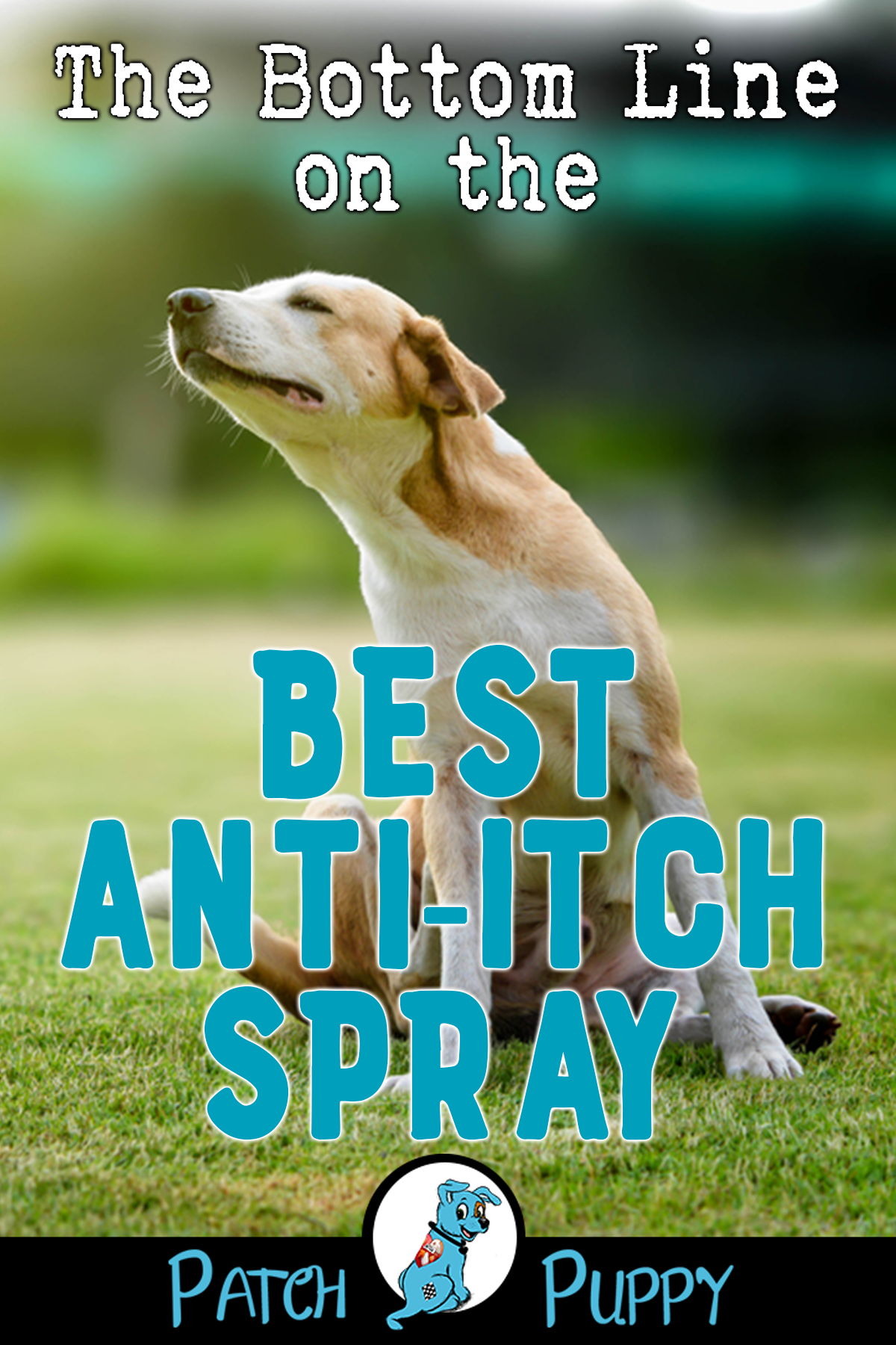 0d0b61f9a53f3bd37ff86eb3f059faff - How Can I Get My Dog To Stop Scratching Himself