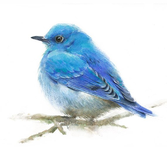 Bluebird  - Giclee Print of watercolor painting. Mountain Bluebird Male. Nature or Bird Illustration,  Dorm Wall Decor  #Bird #Bluebird #decor #Dorm #Giclee #Illustration #Male #mountain #nature #Painting #Print #Wall #Watercolor