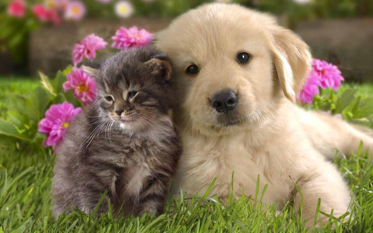 Cute Dogs and Cats Puppies Kittens Man bestfriend forever Dogs