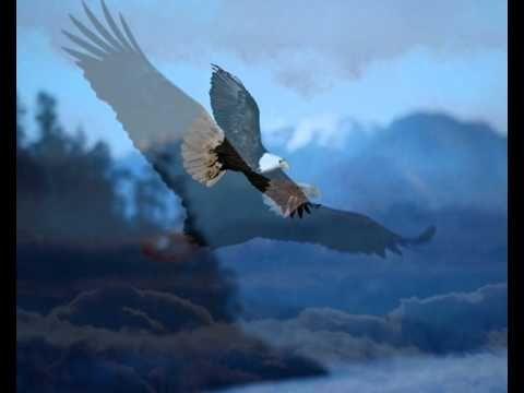 Orla Cien Varius Manx Bald Eagle Animals Poland