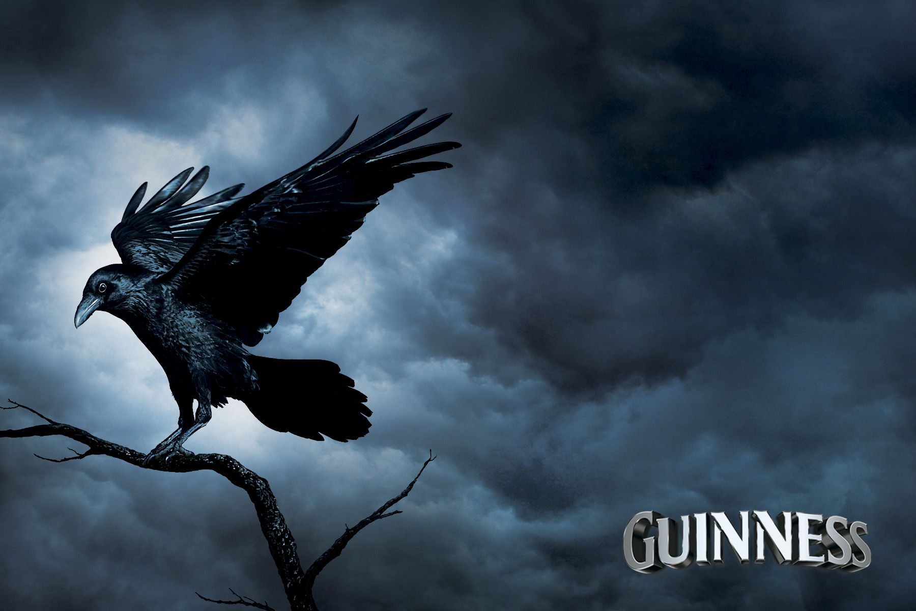 stephen cribbin . subtle composites Guinness The Raven