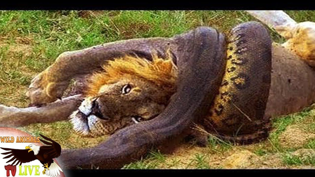 Pin by Most Amazing Moments Of Wild Animal Fights on Wild