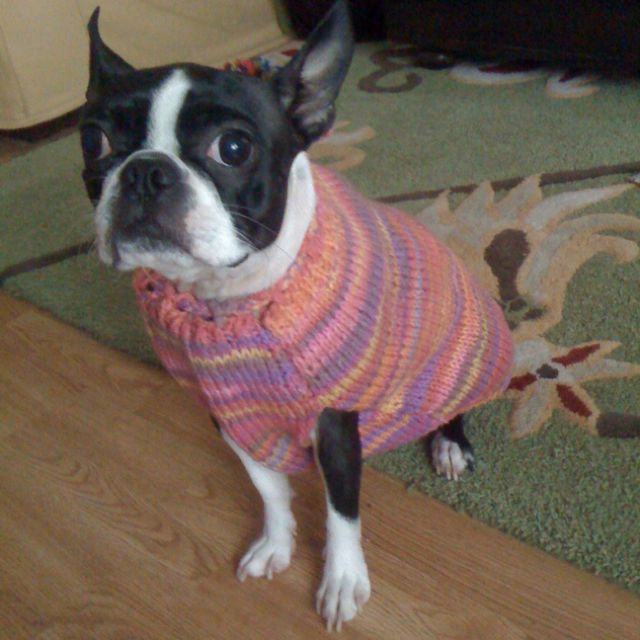 Homemade sweater for Maybelline!