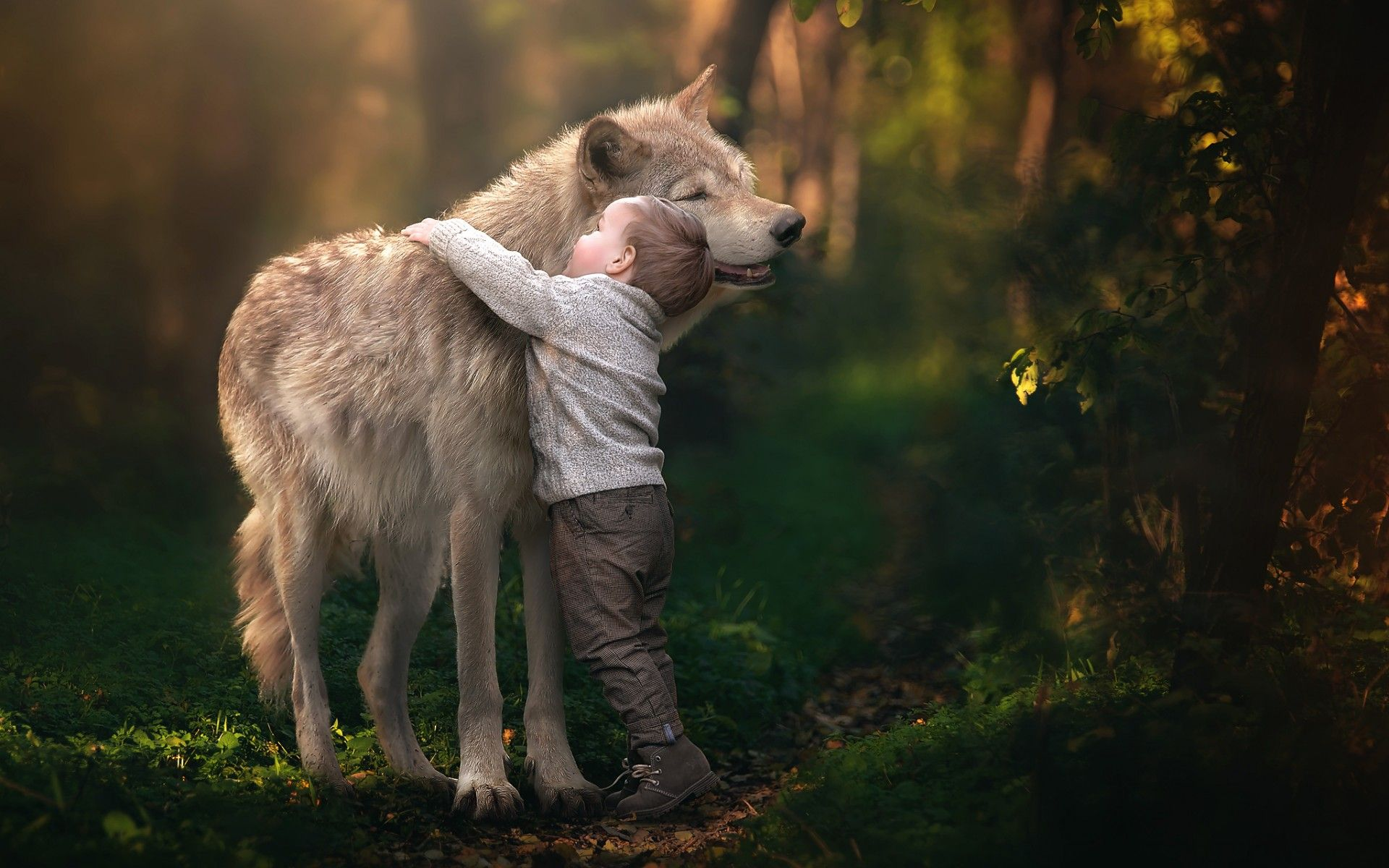 Little boy hugging a wolf in forest on sunny day amazing - Amazing wallpapers for boys ...