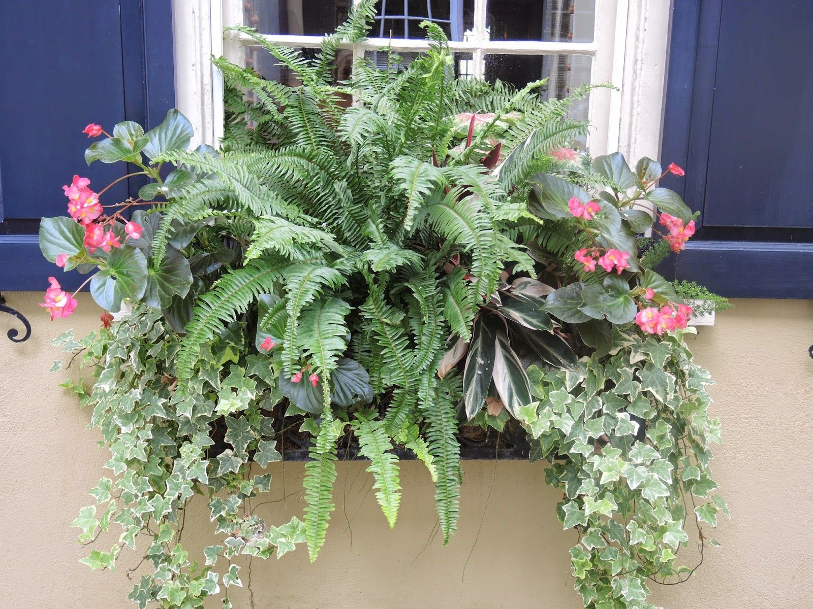 Christmas window box filler - Shade Window Box Begonias Ivy Ferns Flower Window Box Planter For Shade Pink And