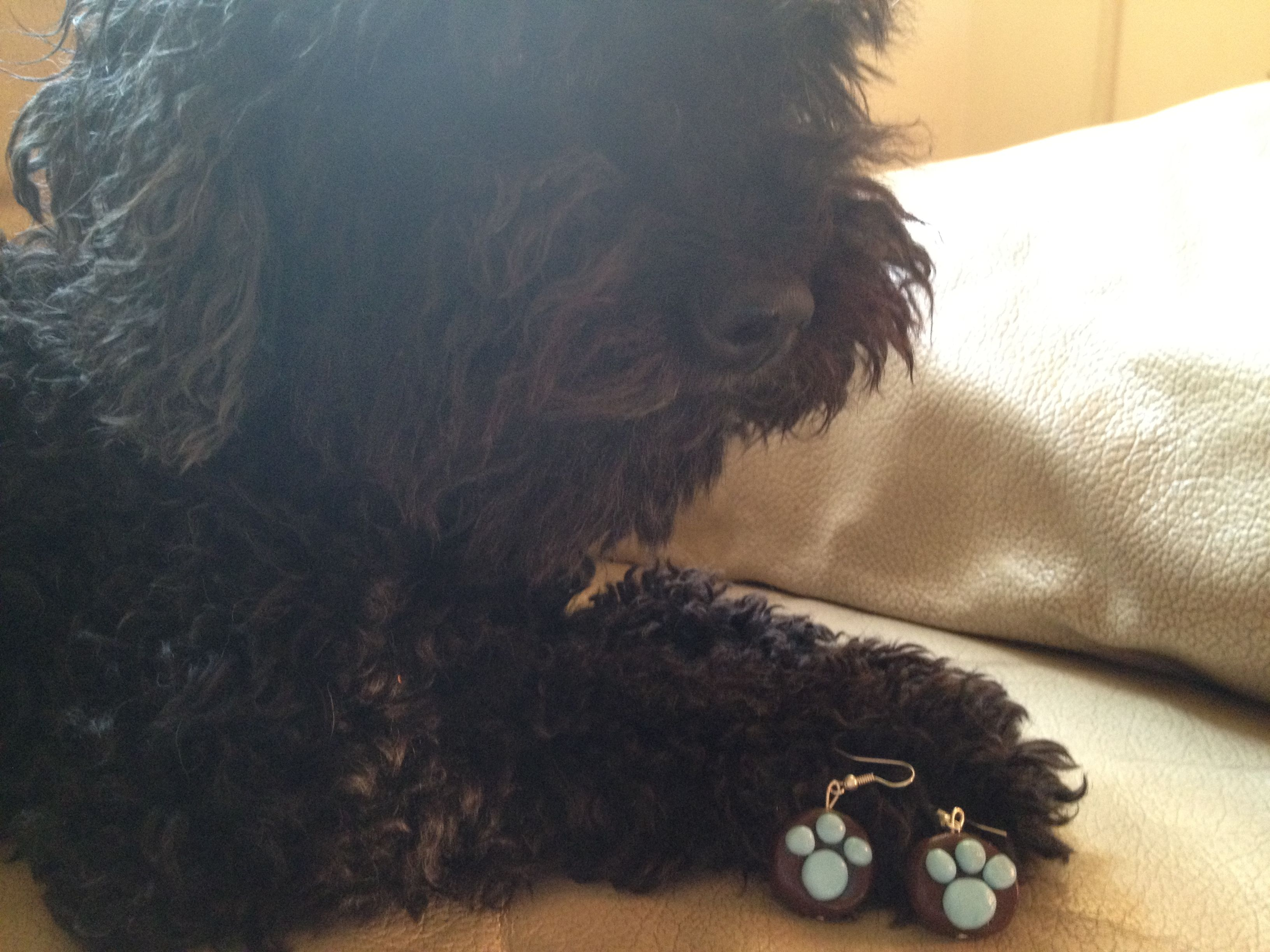 My lovely doggy poodle with my earrings with fimo