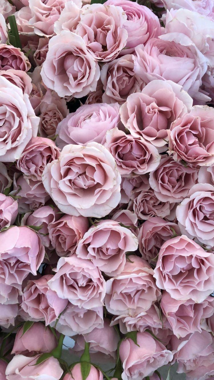 Armaan malik and guru randhawa - Pink rose wallpaper iphone ...
