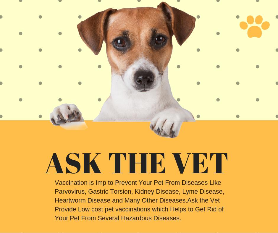 Pin on home visit vet