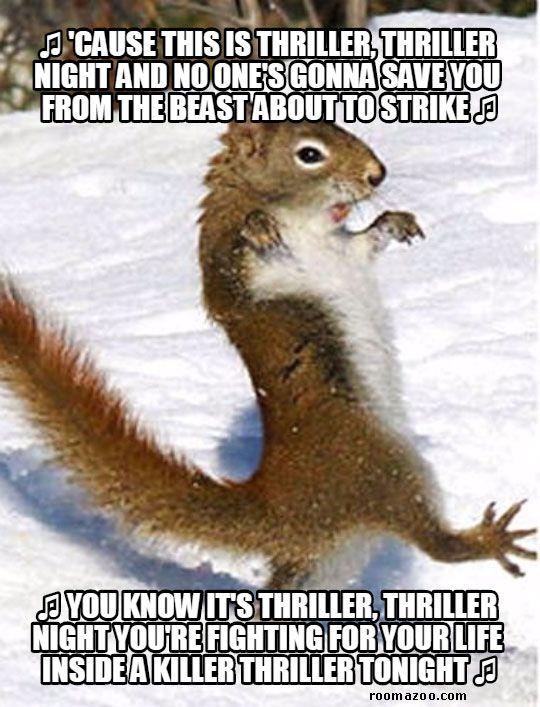 Thriller Squirrel Funny Animals Meme Pic Best Humor