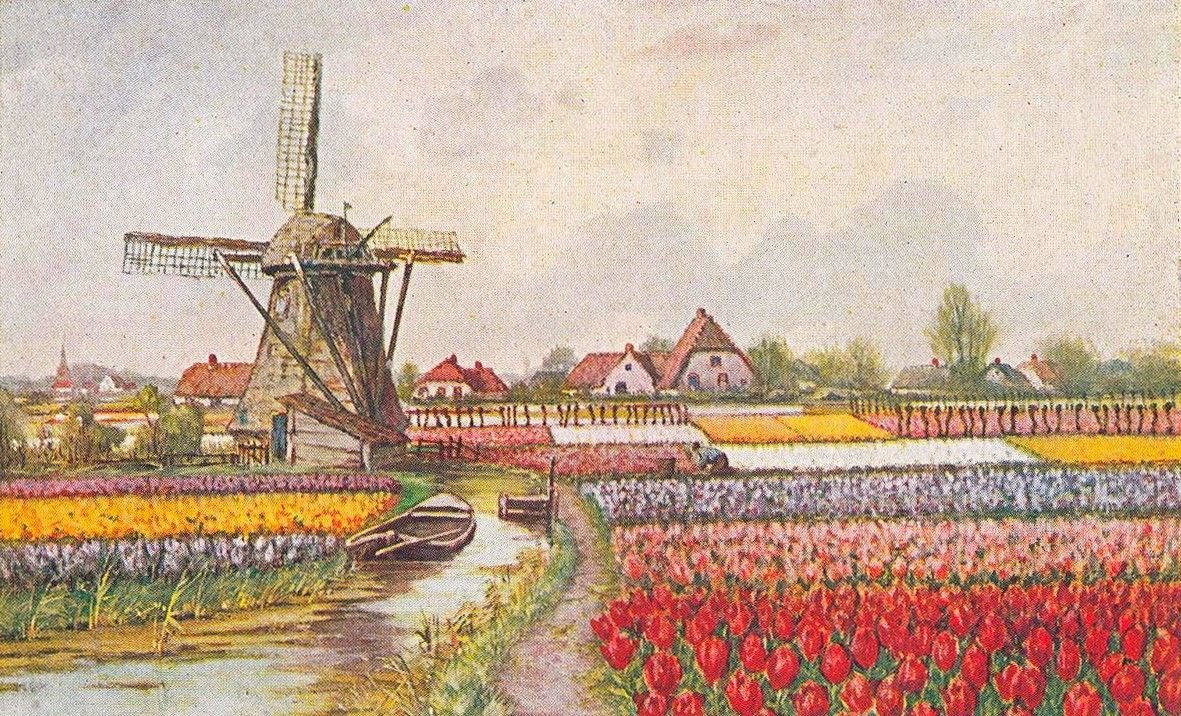 Postcard : windmill and tulip fields, the Netherlands