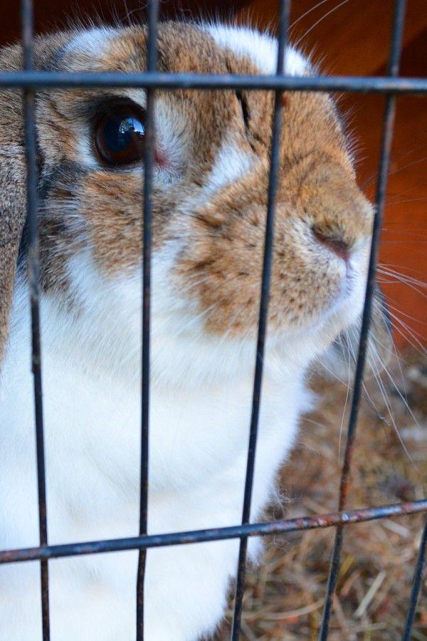 Kleintiere So Sehr Leiden Kaninchen Co Unter Falscher Haltung Menschen Leben Bildderfrau De Kleine Tiere Tiere Wilde Tiere