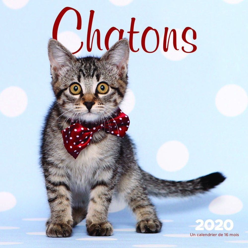 Chatons 2020 7 X 7 Inch Monthly Mini Wall Calendar Cats Pets Feline Cat Family Isbn 978 1 5256 0445 4 Cat Family Pets Cats Kitten Cuddle