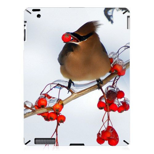 Bird On The Branch iPad 2 Case Animal wallpaper, Animals