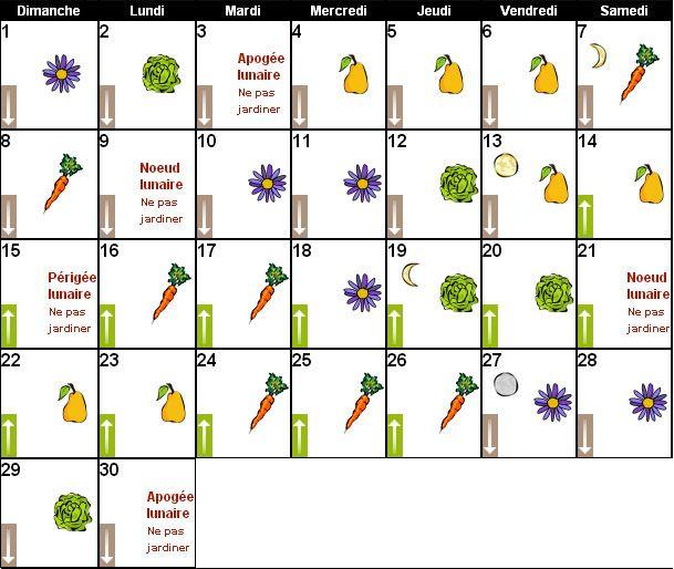 Calendrier Lunaire Graine Et Plantes.Jardiner Avec La Lune Calendrier Lunaire De Juin