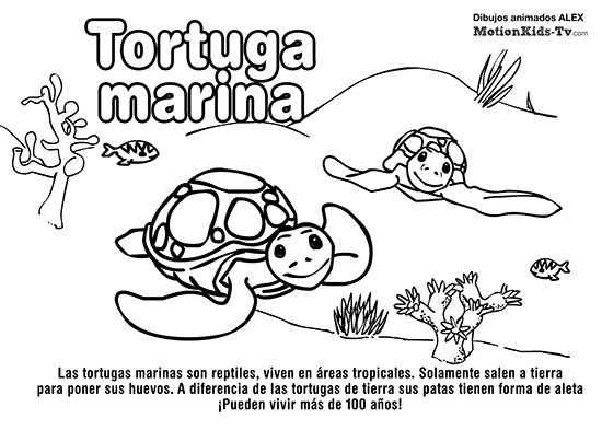 TORTUGA MARINA, pintas animales del mar, dibujos colorear ...