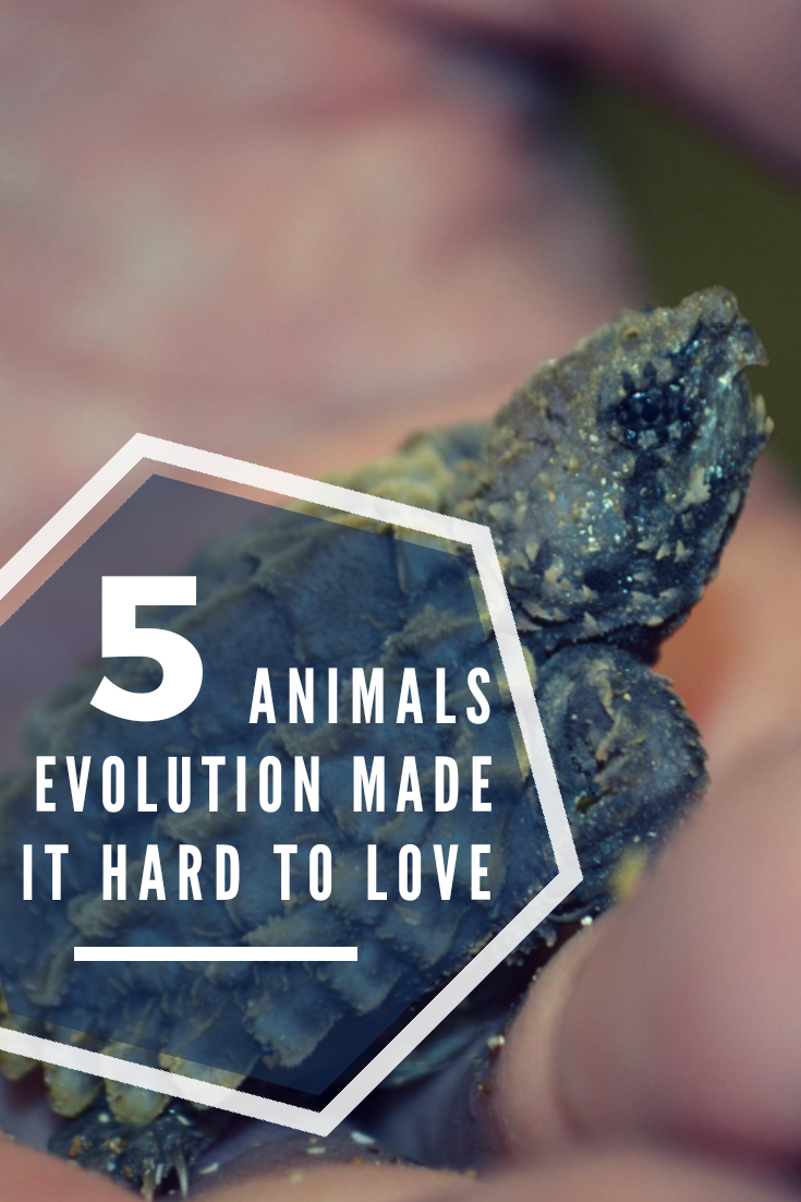 As eco travellers we love all animals… but there are definitely some