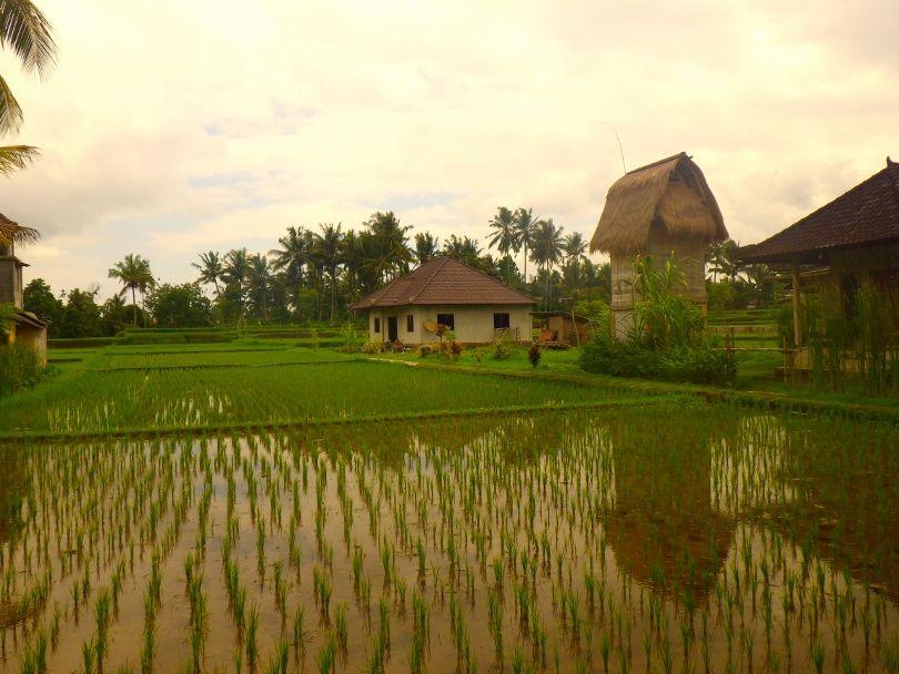 Que faire à Bali et visiter en 8 coups de cœur