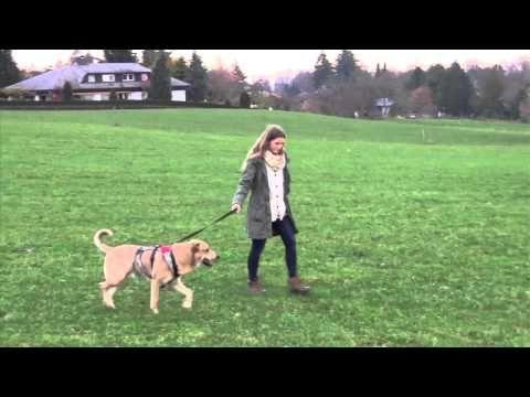 Hundebegegnungen Mit Und Ohne Leine Stressvermeidung Bei Hundebegegnungen Youtube Aggressive Hunde Hunde Hunde Erziehen