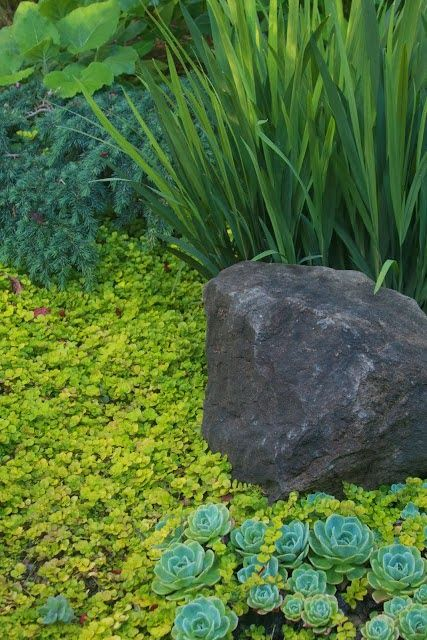 (see new pins on board No3 of Plant Combinations)  Imagine the driftwood sphere instead of boulder in a bed of contrasting foliage on the slope...