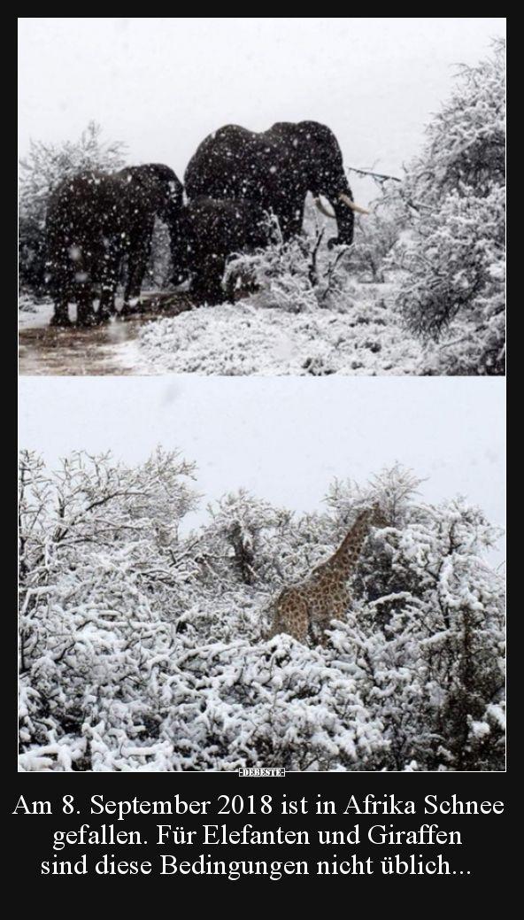 Am 8. September 2018 ist in Afrika Schnee gefallen. Für.. | Lustige Bilder, Sprüche, Witze, echt lustig