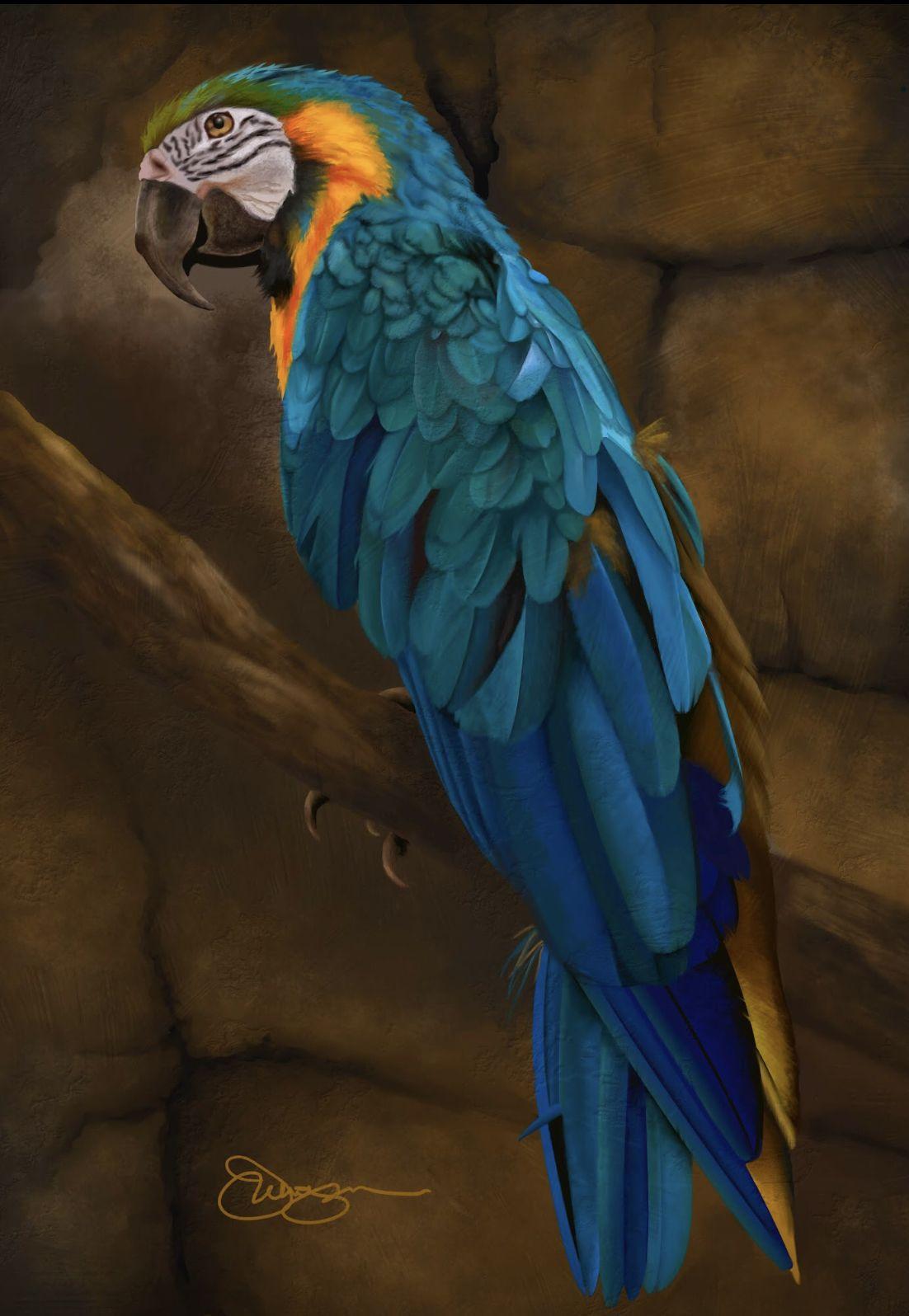Blue Parrot Digital Art On Canvas Etsy Parrot Wallpaper Parrot Bird Pictures
