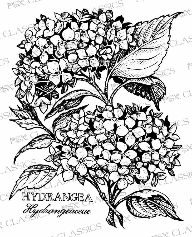 Hydrangea Botanical Psx Design Classics On Www