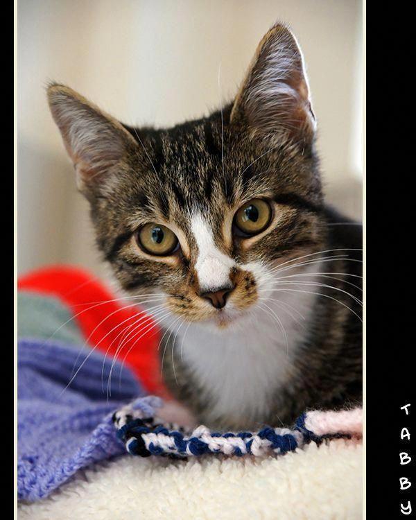allergictocats Cat safe plants, Cat has fleas, Flea