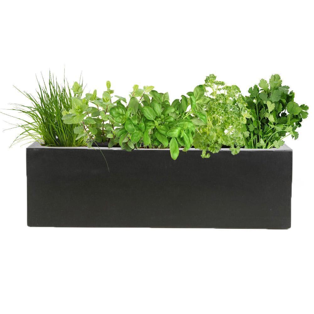 Plantes Aromatiques En Jardinière lilou - plantes aromatiques & balconnière noire