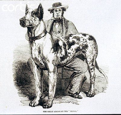 Prince Black And White Harl And His American Owner Francis