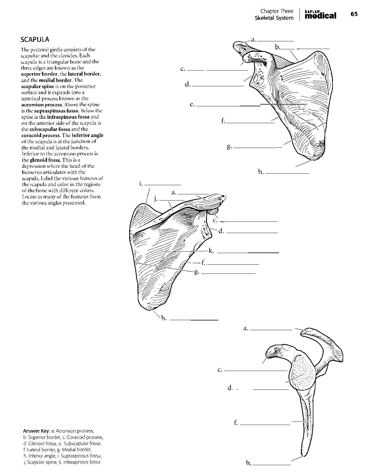Kaplan Anatomy Coloring Book.pdf | boudli | Pinterest | Anatomy