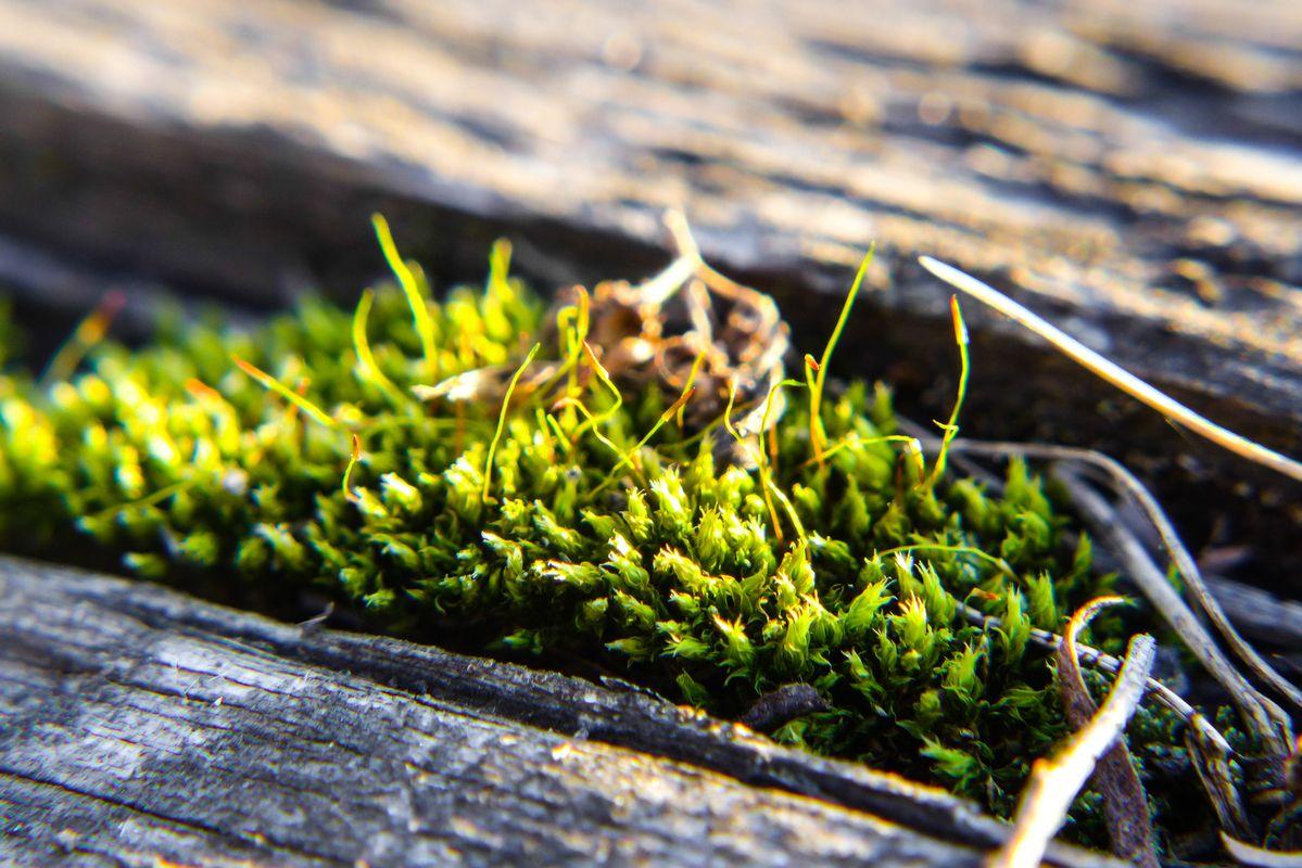 Macro s of green Moss nature photos