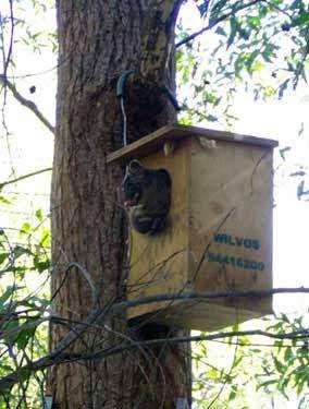 Guide To Making Possum Boxes Http Www Environment Nsw Gov Au Animals Guidetomakingapossumhouse Htm Possum Bird Boxes Nesting Boxes
