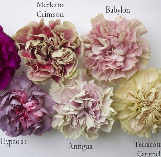 Antique Hued Carnations For Shabby Chic Wedding Ask Your Fl Designer