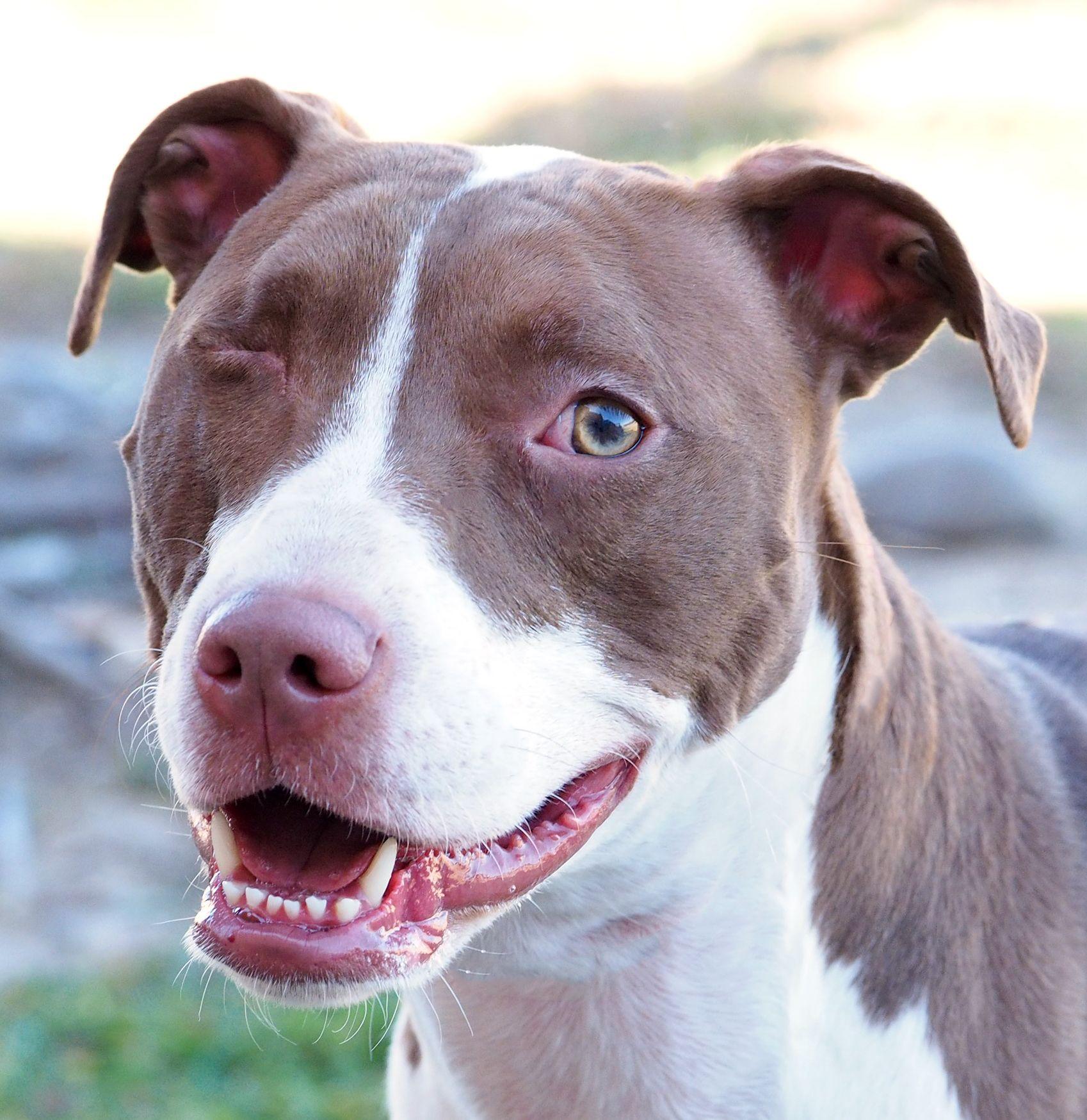 Dogs image by San Antonio Humane Society on SAHS Dogs
