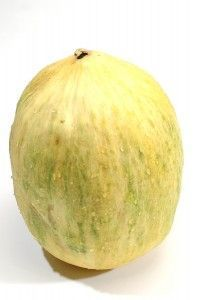 How To Grow Winter Melons #wintermelon How to Grow Winter Melons: Casaba Crensh #wintermelon
