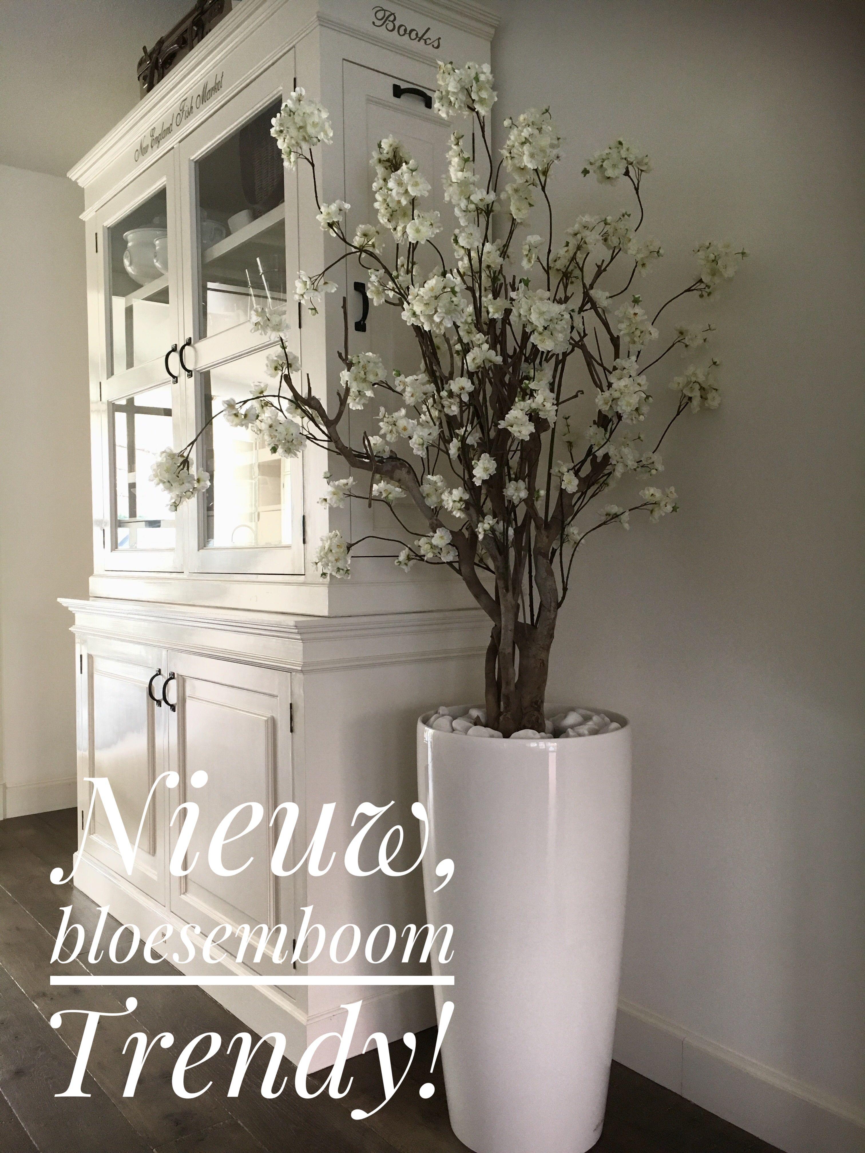 Nieuw in de verkoop bloesemboom Trendy Totale hoogte 180 Bloesemboom is 140 hoog